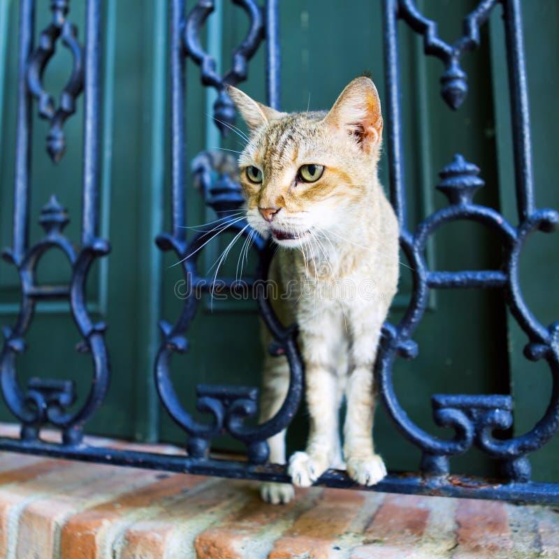 Cat. On San Juan Streets royalty free stock photography