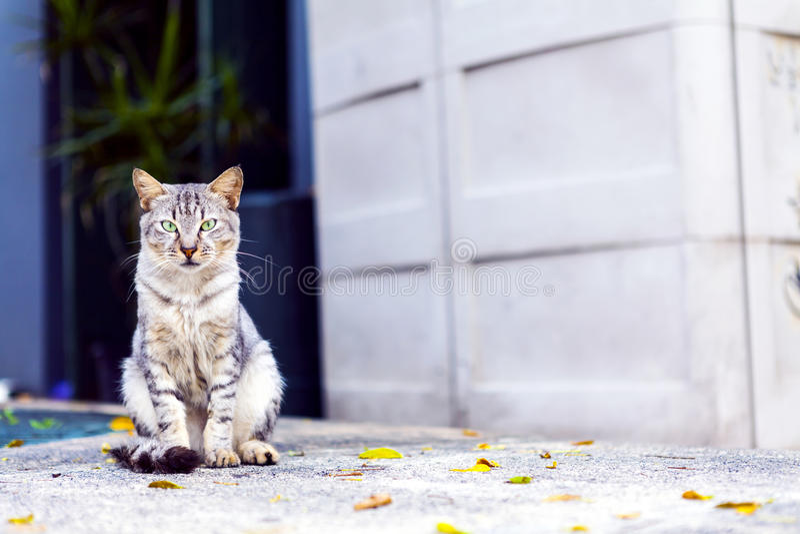 Cat in San Juan. Cat on San Juan Streets stock images