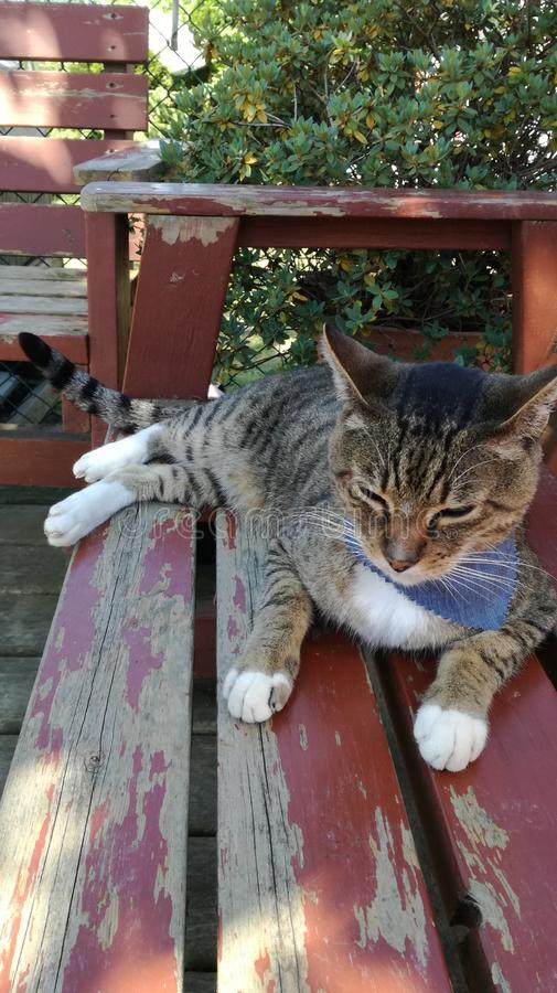 Cat Sanctuary Spring-tijd stock fotografie