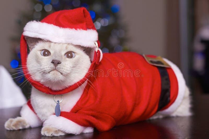 Download Cat In Santa Claus Costume stock image. Image of event - 35758285 & Cat In Santa Claus Costume stock image. Image of event - 35758285