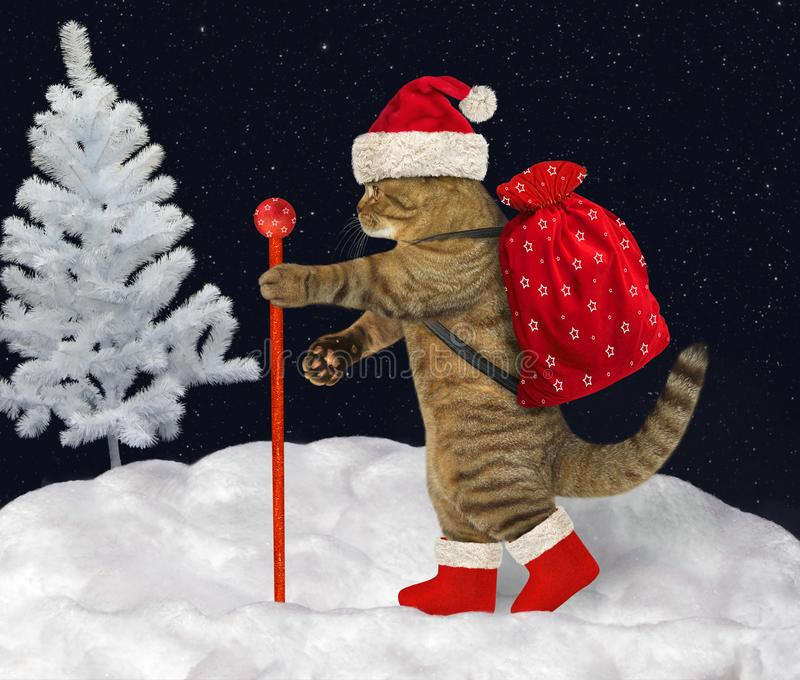 Cat carries Christmas gifts 3 stock photos