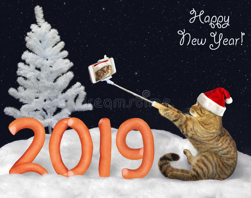 New Year 2019 cat makes selfie 3 royalty free stock photography