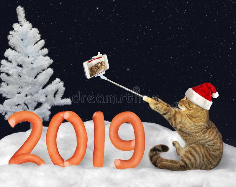 New Year 2019 cat makes selfie royalty free stock photography