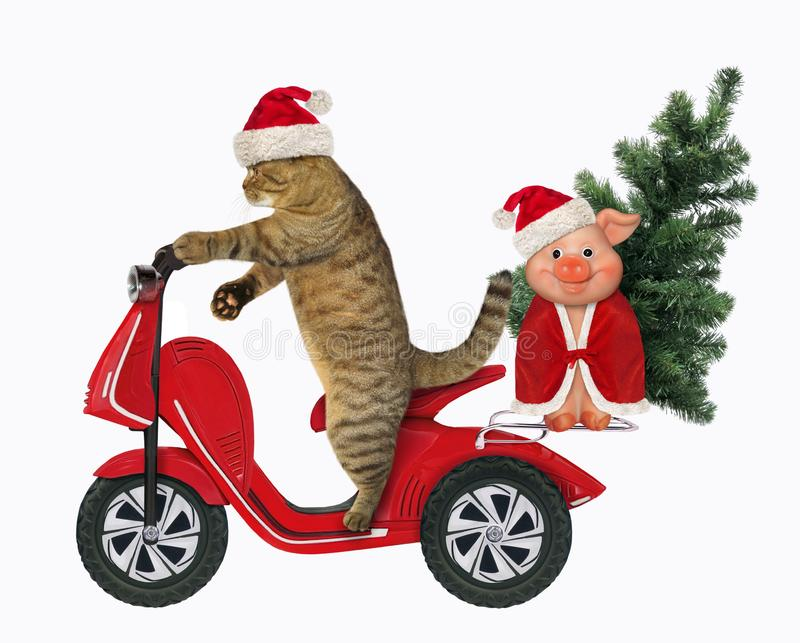 Cat rides a moped with a tree and a pig. The cat in the Santa Claus hat rides a moped with the Christmas tree and a merry pig. White background royalty free stock images