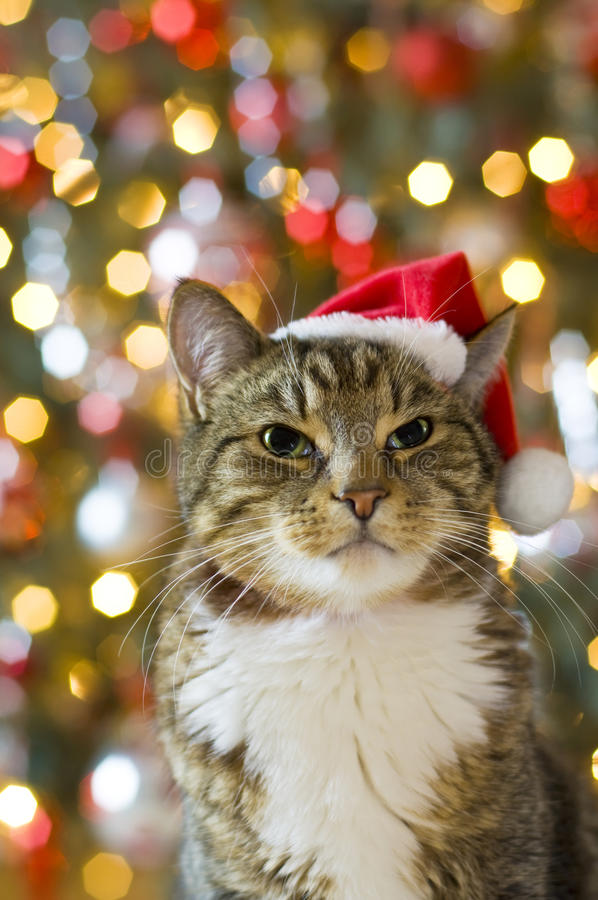 Cat with Santa Claus red hat royalty free stock photography