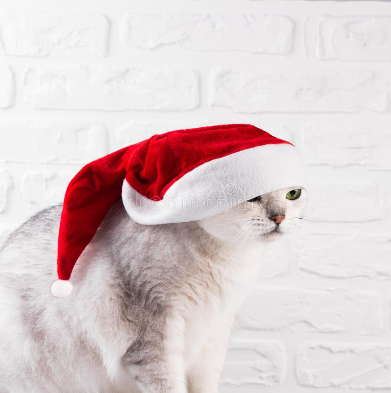 Cat in Santa Claus red hat royalty free stock image
