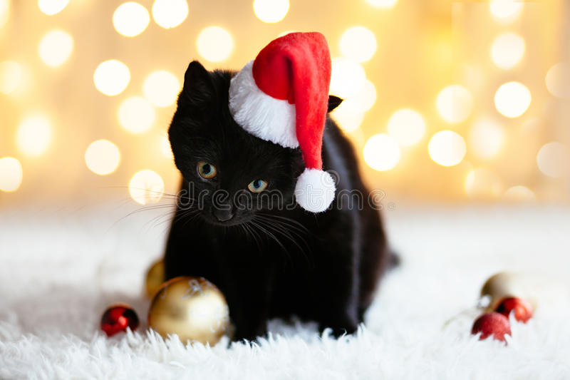 Cat in Santa hat. Black cat in Santa hat sitting over holiday lights. Pet`s Christmas concept. Kitten on Xmas studio bokeh background stock images