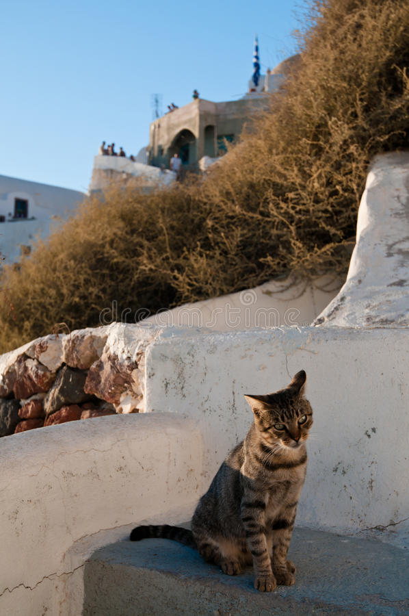 Download Cat in Santorini stock photo. Image of wall, white, summer - 19686956