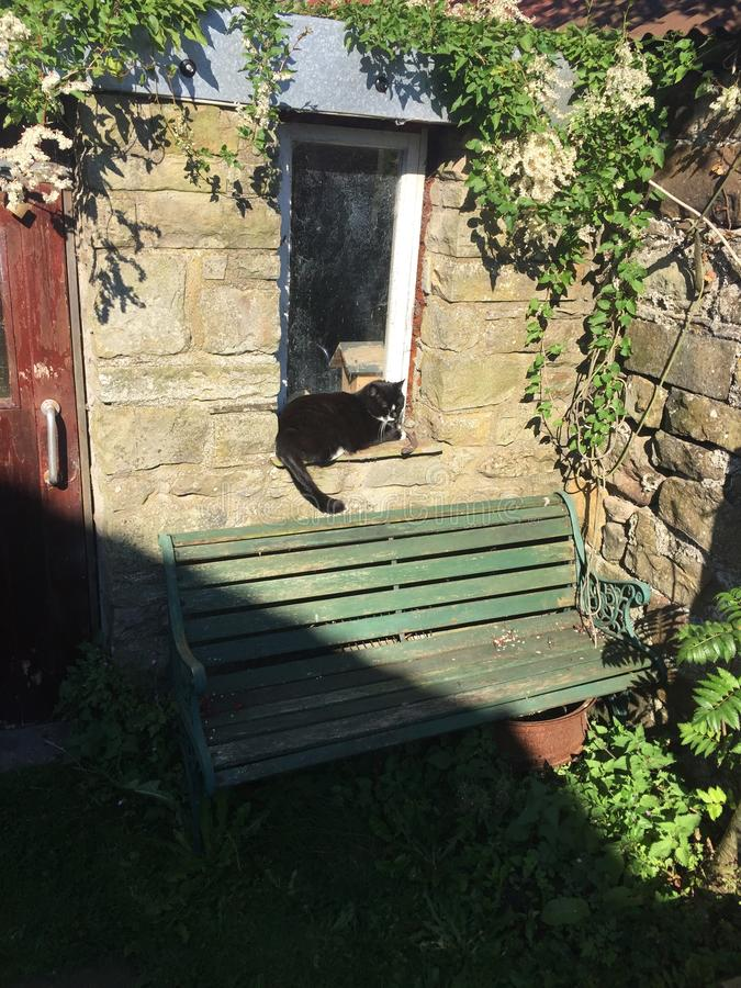 Cat sat on the shed windowsill stock image