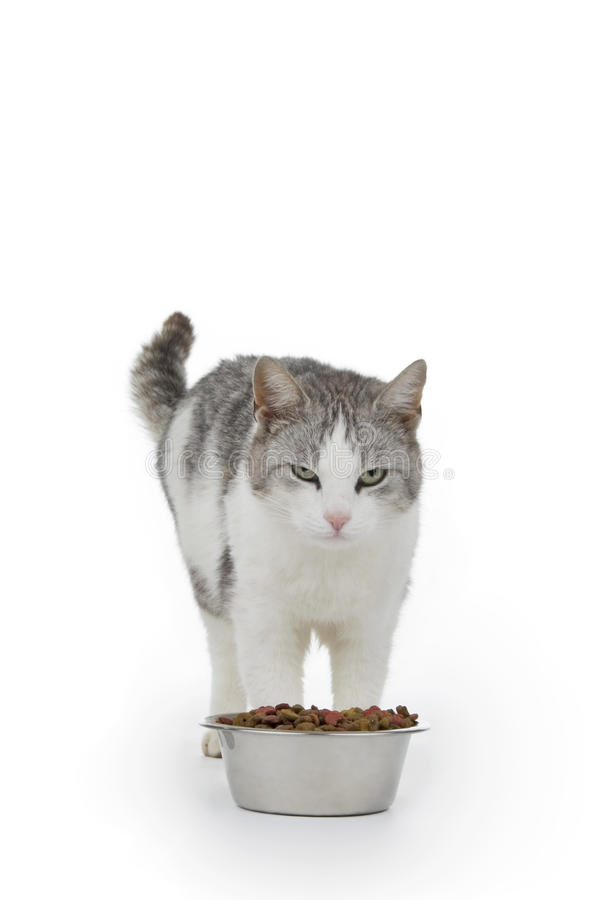 Download Cat with saucer stock photo. Image of lovely, beautiful - 14393576