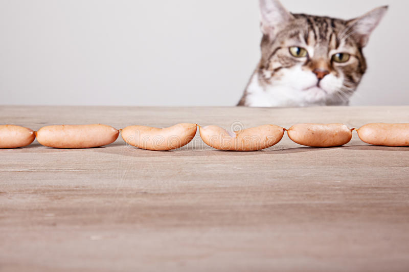 Download Cat and Sausages stock photo. Image of prying, animal - 22729576