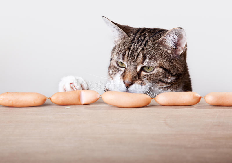 Cat and Sausages royalty free stock image