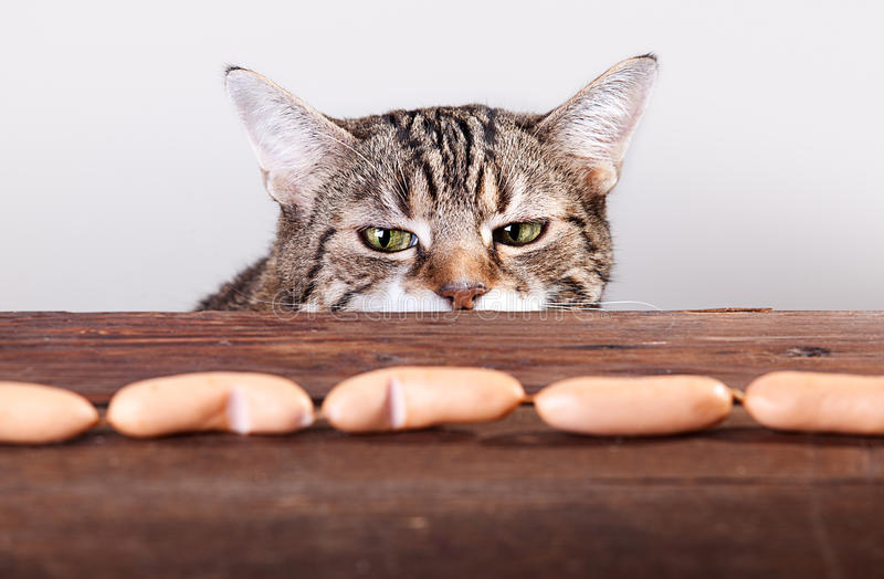 Download Cat and Sausages stock photo. Image of tempt, food, seduction - 22729598