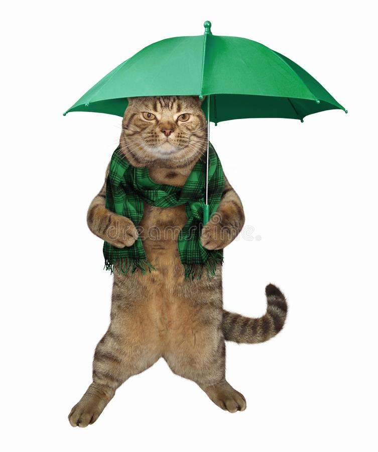 Cat in scarf stands with umbrella 2 royalty free illustration