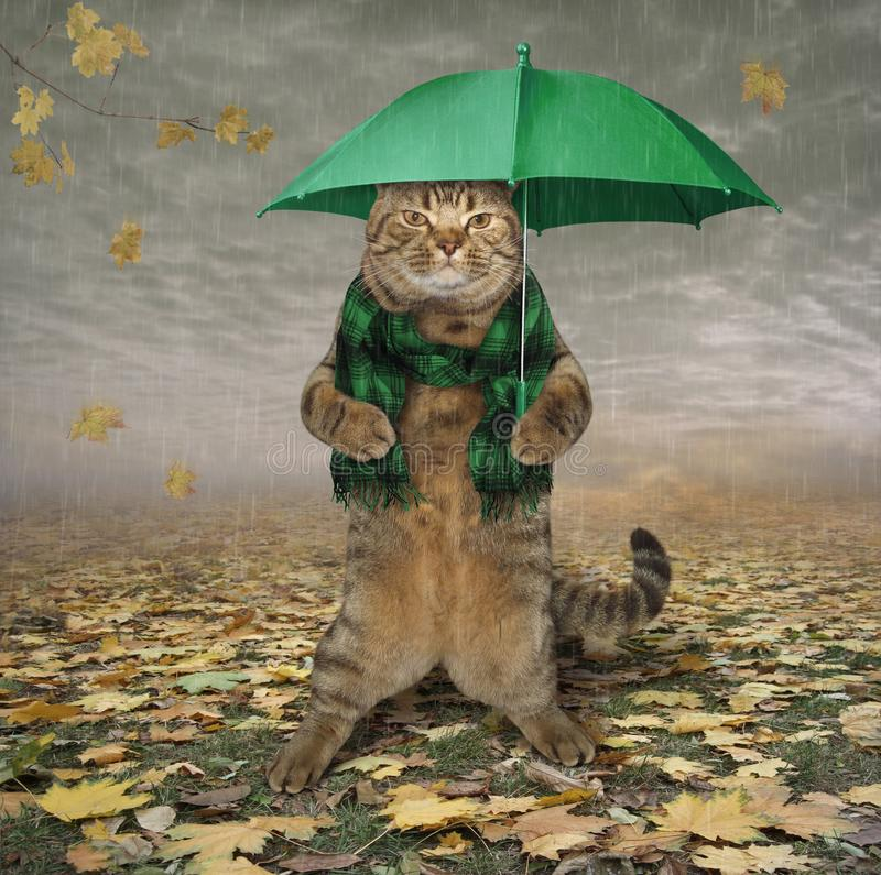Cat in scarf with umbrella royalty free illustration