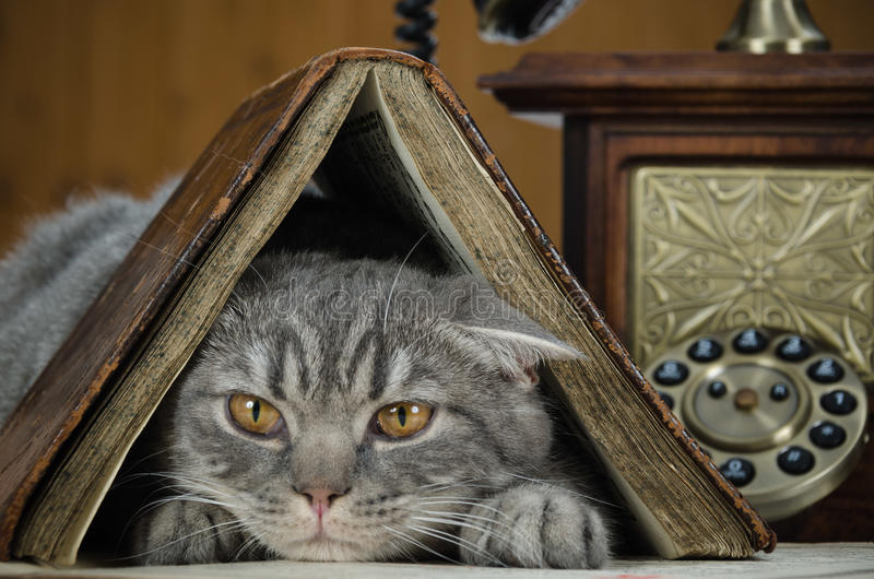 Cat scientific with books on the table royalty free stock photography