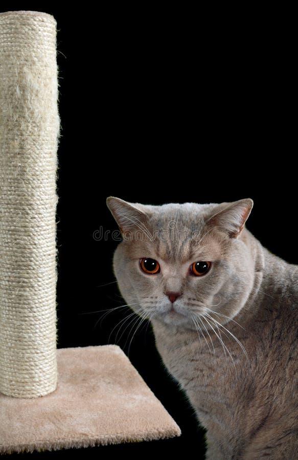 Cat Scratching Post Cutout stock photos