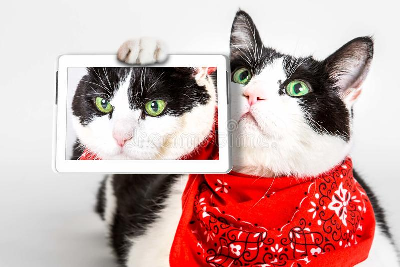 Cat selfie. Black and white cat with green eyes takes a selfie with its tablet