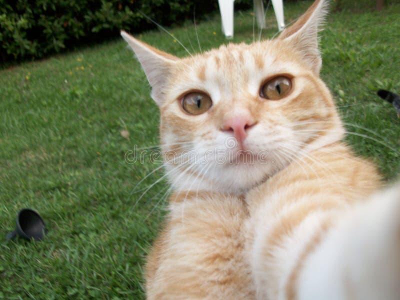 Cat selfie. Funny red cat selfie in the garden