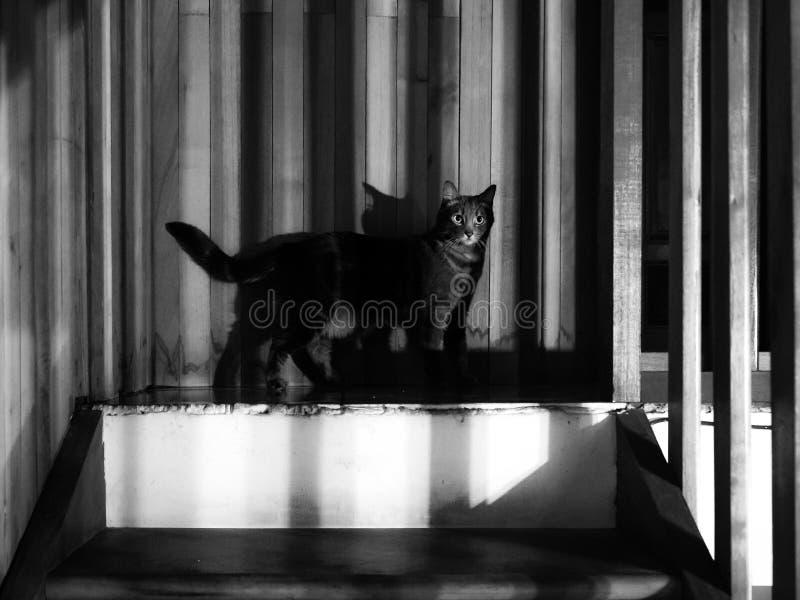 Cat_in_shadow στοκ φωτογραφία με δικαίωμα ελεύθερης χρήσης