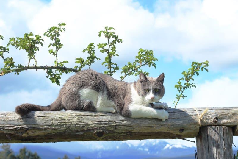 Cat Sharpening Claws na madeira imagem de stock