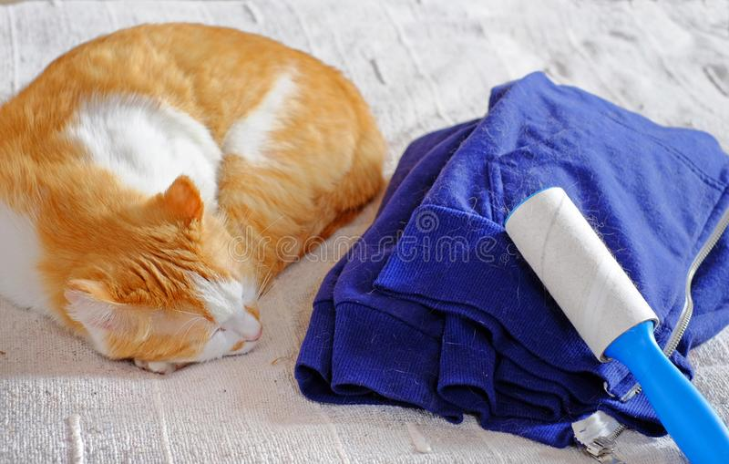 Cat shedding, blue jacket full of animal`s hair and lint remover. stock photo