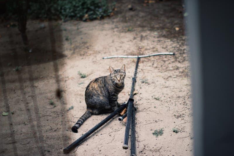 Cat Shenanigans fotos de archivo