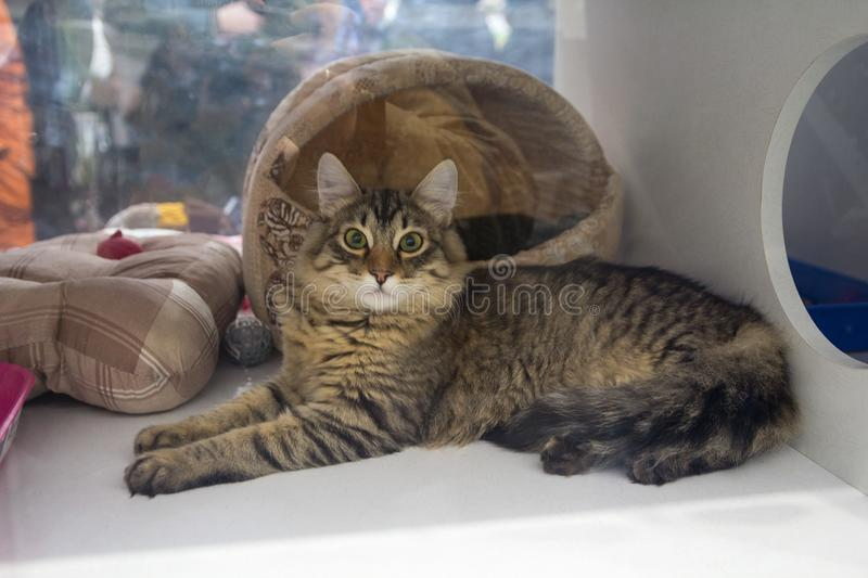 Cat in an animals shelter. Cat on a show-window in an animals shelter royalty free stock photos