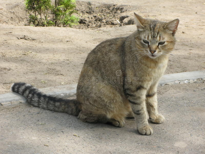 Cat on the sidewalk. Tiger cat sitting on the sidewalk royalty free stock photography