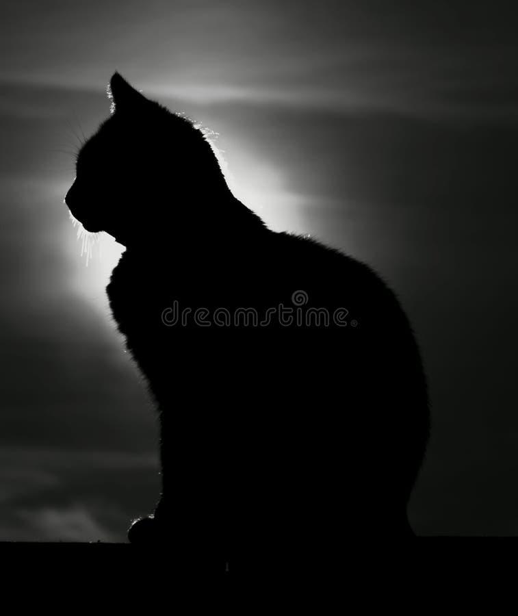 Cat Silhouett fotografia stock libera da diritti