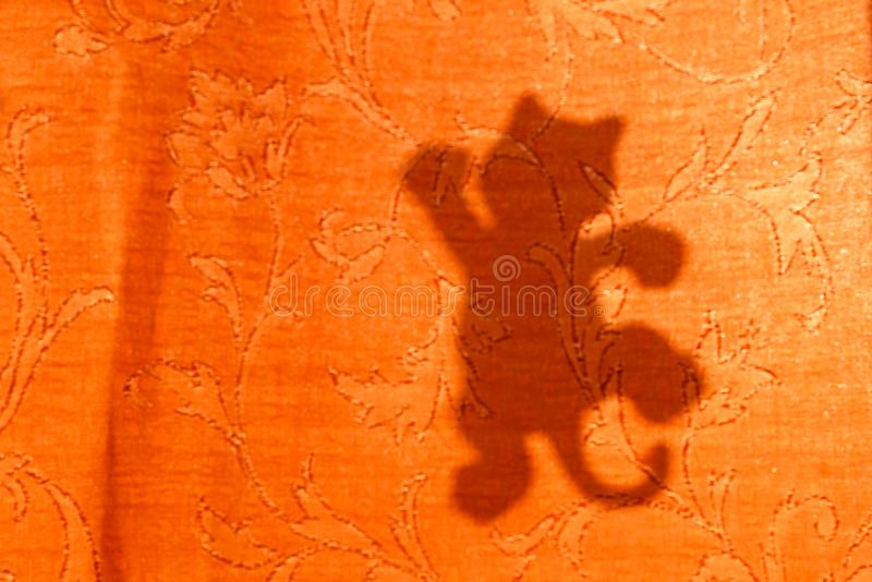 Cat silhouette from sunlight on curtain, blurred background.  royalty free stock images