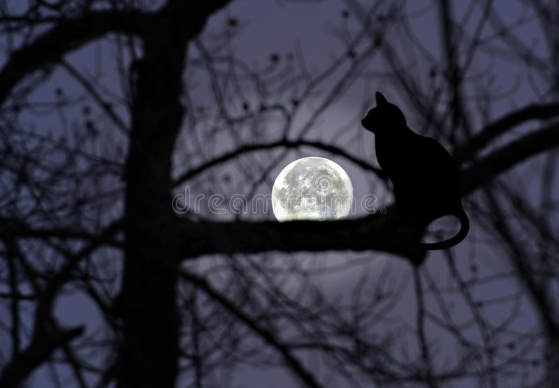 Cat Silhouette in a Tree with Full Moon Glowing stock photos