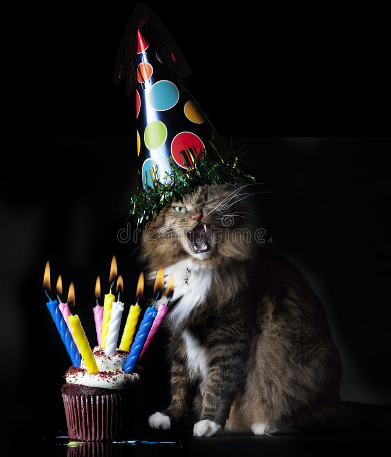 Cat Singing Happy Birthday arkivbild