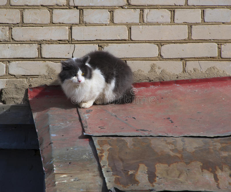 Download Cat sit on a roof stock image. Image of home, different - 40391937