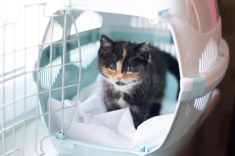 The cat sits in a carrier for animals . A pet. Transportation of animals. Little kitten stock image