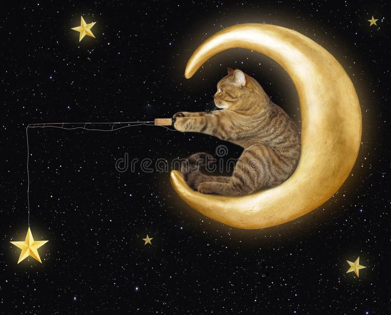 Cat on moon catches stars royalty free stock photos