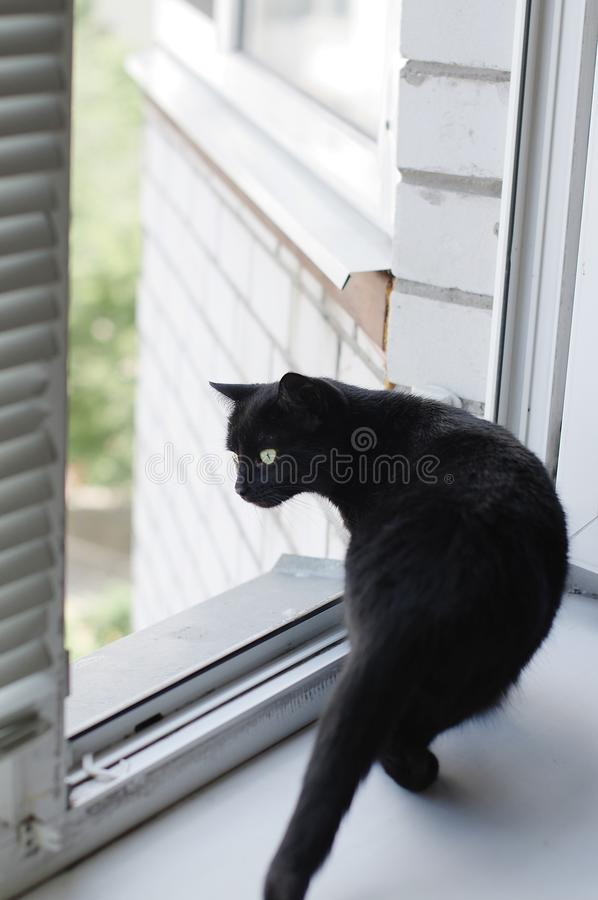The cat sits near the window and looks out the street stock images