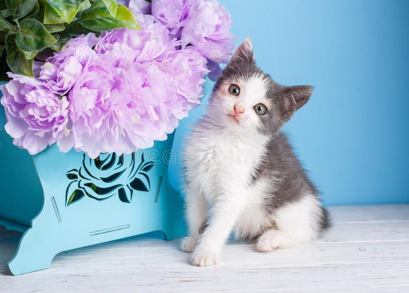 The cat sits next to the flower box royalty free stock image