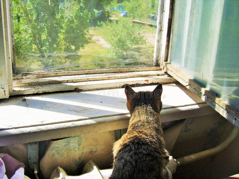 The cat sits on the radiator next to the window sill and looking at the old shabby window, through the mosquito net royalty free stock photo