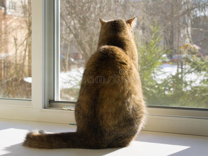 Cat sits on the windowsill and looks out the open window through the mosquito net.  stock photo