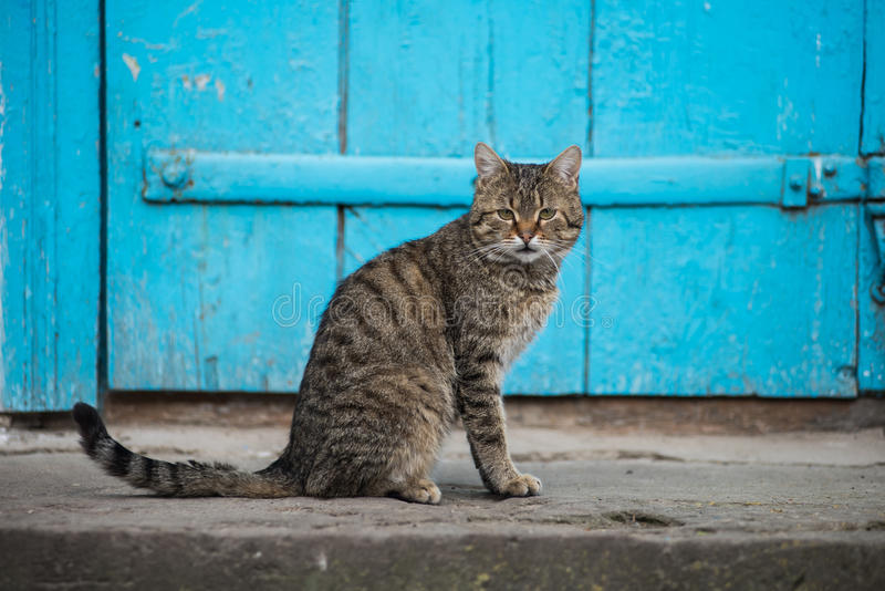 Cat sits in the yard near the blue door. Village. Cat sits in the yard near the blue door royalty free stock photography