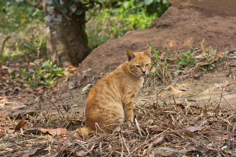 Download Cat sitting stock photo. Image of outdoors, brown, garden - 23780648