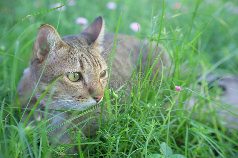 Cat play in the garden royalty free stock photos