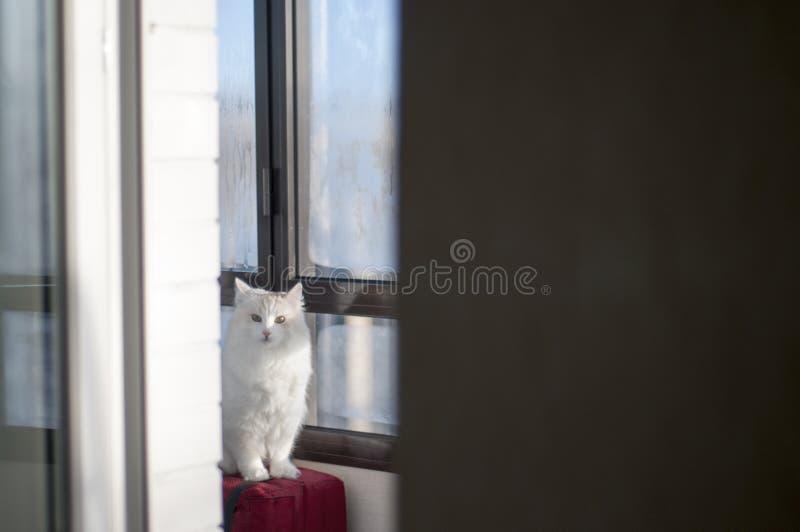 Cat sitting on the balcony. Animals. Sweet home. Sunny morning. Sun ray. Pets. Kitty stock photo