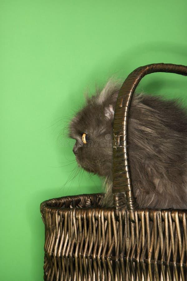 Download Cat sitting in basket. stock image. Image of animal, feline - 2045669