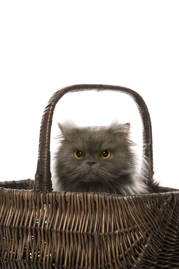 Cat sitting in basket. stock photo