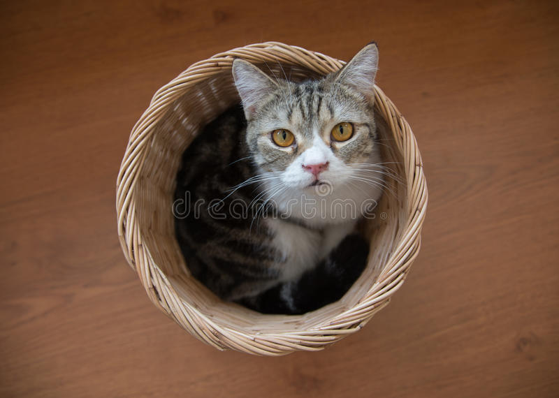 Cat sitting in the basket stock photography