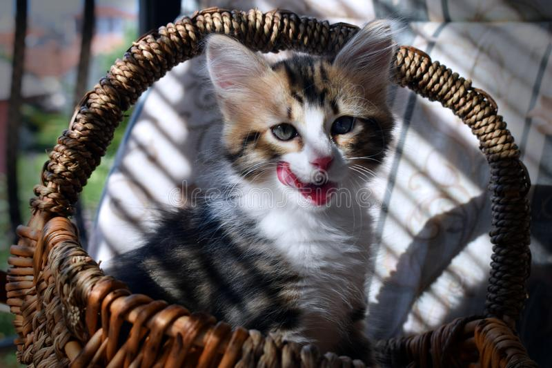 Cat sitting in a basket royalty free stock images
