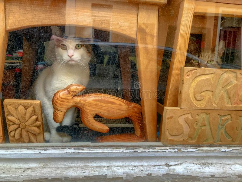 Cat sitting behind the window looking outside stock images