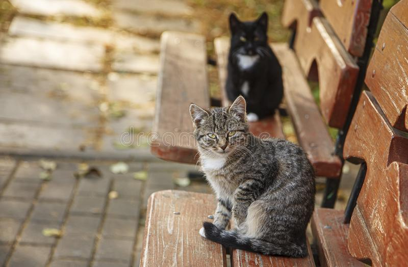 The cat is sitting on the bench. royalty free stock photography